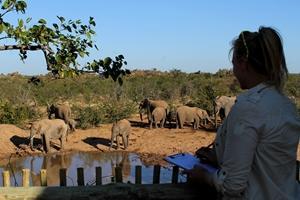 Voluntaria de Conservación ayuda a identificar elefantes en reserva de Botsuana