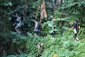 Volunteers use their leisure time to explore the rainforest in Samoa
