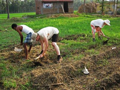 Voluntarios durante trabajos agrícolas en granja
