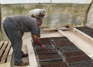 Voluntario y granjero local plantando semillas en Jamaica