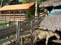 7-Day Peru Conservation Project - Pilot Farm
