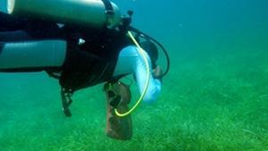 Voluntario de buceo participa en una inmersión de limpieza en el Proyecto de Conservación de Belice.