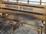 Galapagos Island Conservation