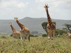 Wildlife protection in Kenya