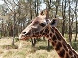 Kenya: African Savannah Conservation