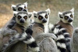 Volunteer on the Rainforest Conservation project in Madagascar