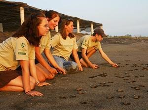 Group of volunteers releasing the hatchlings