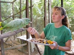Conservation volunteer feeding parot in animal release program in Peru