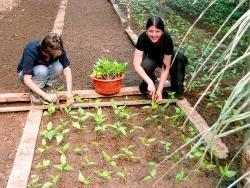 Volunteers transplanting trees in Peru