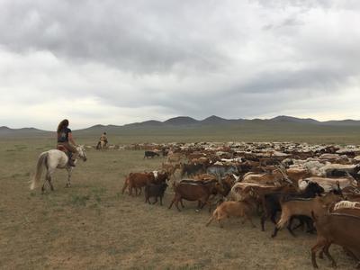 Voluntaria ayudando a cuidar del ganado en proyecto Nómada en Mongolia