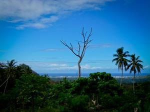 Volunteer as an Occupational Therapist in Samoa