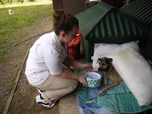 Voluntaria alimenta a un perro en proyecto de Cuidado de Animales