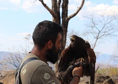 Un miembro del personal de Projects Abroad en el proyecto de Cetrería en México con un halcón en su proceso de entrenamiento