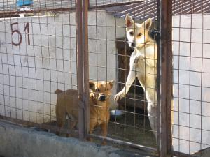 Perros en en centro de rescate en Rumanía