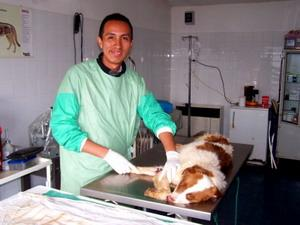 Veterinary intern in Romania